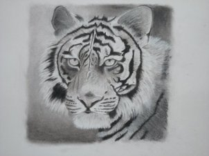 Tiger - black and white pastel drawing