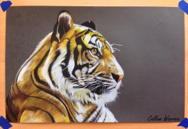 Tiger - Prismacolour drawing