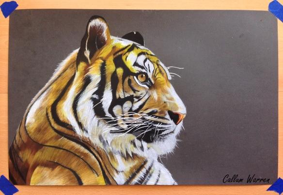 Tiger finishedd