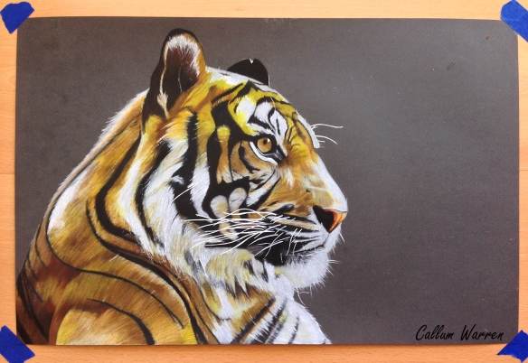 Tiger finishedd